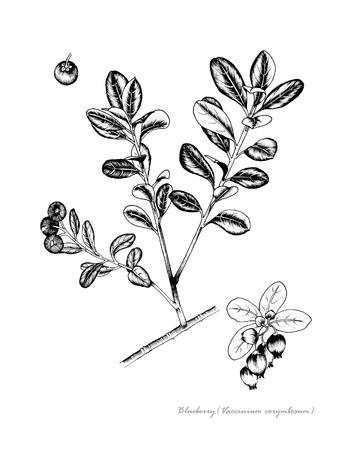 과일의 세부 꽃과 블루 베리 스톡 콘텐츠