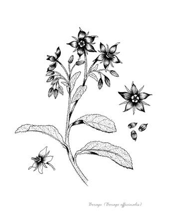 꽃과 씨앗의 세부 서양 지치