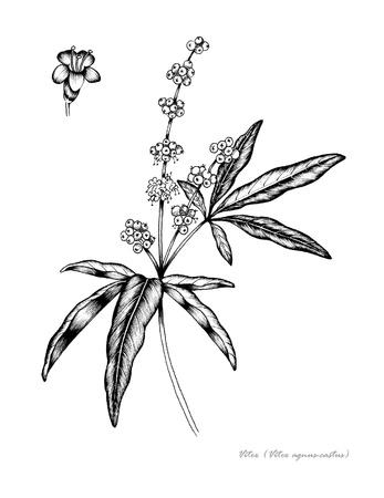 꽃과 과일의 세부 순결한 트리 바이 텍스