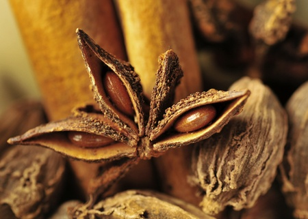 spice pod star anise Stock Photo - 8278862