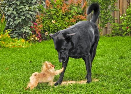 smal dog vs big dog photo
