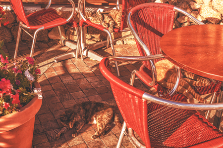 Cats in a cafe on a sunny morning. Stock Photo