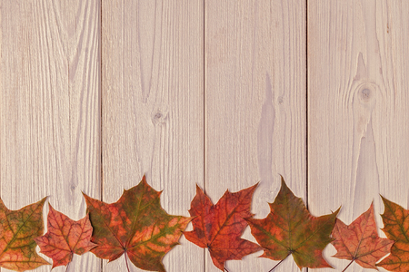 Beautiful multi-colored autumn leaves on wooden background.