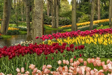 Floraison des fleurs dans le parc de Keukenhof, Amsterdam, Pays-Bas, Europe. Banque d'images - 90422100