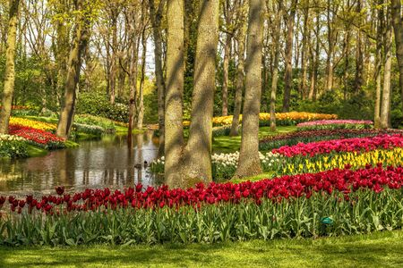 Blooming flowers in Keukenhof park, Amsterdam, Netherlands, Europe.
