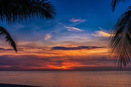 Sunset and palms - nature background.