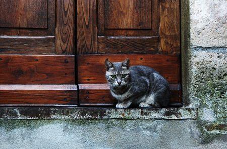 doorstep: Grey european cat on the doorstep