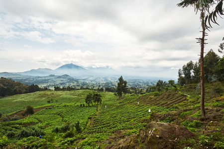 Green Landscape view in Virunga reserve, Rwanda Stock fotó