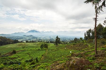 Green Landscape view in Virunga reserve, Rwanda Archivio Fotografico