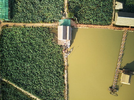 Aerial drone view topdown of a lotus farm in rural Cambodia countryside