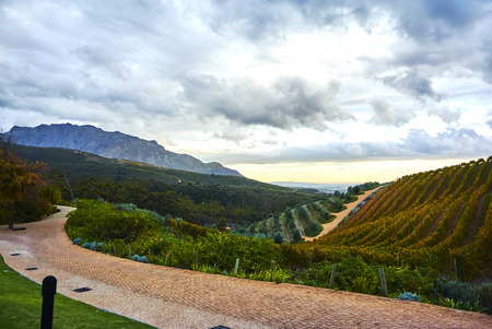 Stellenbosch is a town in the Western Cape province of South Africa, situated about 50 kilometres (31 miles) east of Cape Town