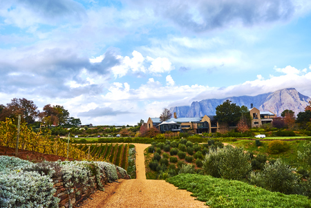 Stellenbosch is a town in the Western Cape province of South Africa.