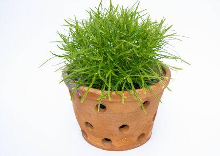 olla barro: Mini �rbol verde en la olla de barro