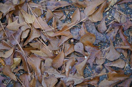 Fall leaves after rain Stok Fotoğraf