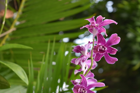 Orchid flower on a street of Thailand Foto de archivo - 114827559