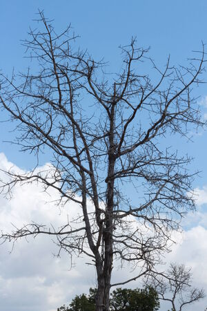 no edges: tree and sky