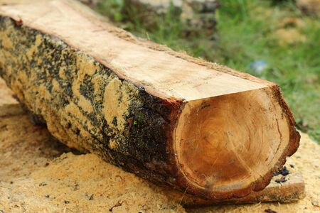wooden boards: timber logs storage for construction or industrial