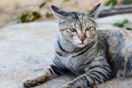 gray cat: Cute gray cat was sitting . Stock Photo