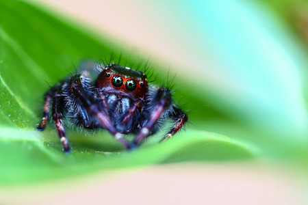 Spider macro outdoor . Insects in Asia Thailand. Stock Photo