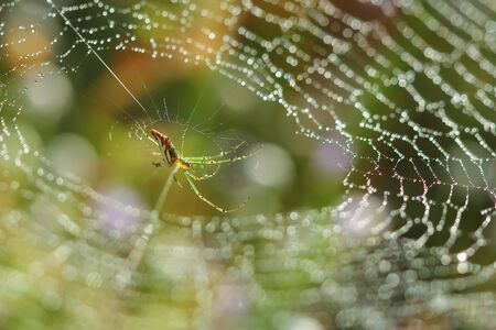 Spider. Spiderweb on a meadow in the morning light.