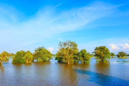 to drown: Inundación de la zona agrícola, Roi Et, Tailandia.