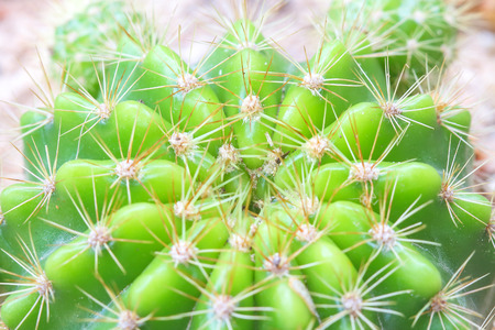 Cactus with sharp thorns in close-up view.