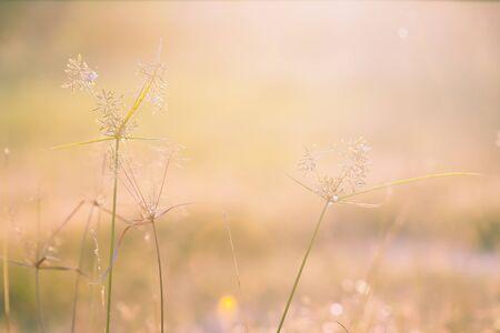 Beautiful meadow in the sunset. Vintage atmosphere. Standard-Bild - 130061227