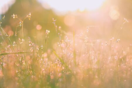 Beautiful meadow in the sunset. Vintage atmosphere.