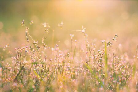 Beautiful meadow in the sunset. Vintage atmosphere. Standard-Bild - 130061230