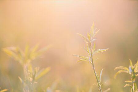 Beautiful meadow in the sunset. Vintage atmosphere. Standard-Bild - 130061232