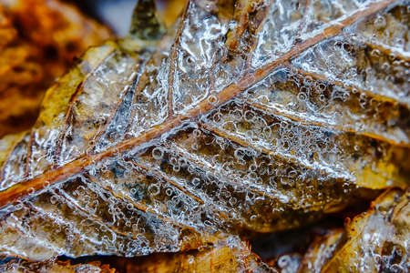Autumn leaf under the ice natural background Stockfoto