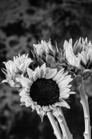 Still life of cut flowers