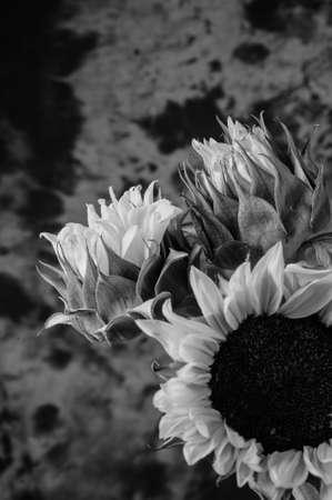 Still life of thhree flowers