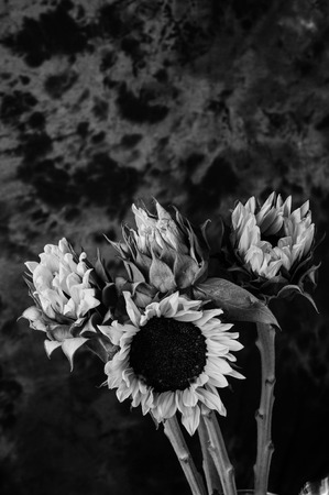 Still life of sunflowers photo
