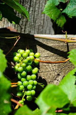 Grapes against wood