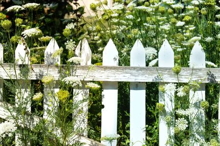 picket fence: Picket fence in white weeds Stock Photo