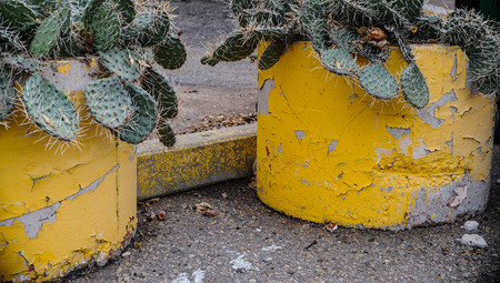 Two planters with cactus