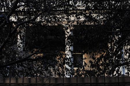 Mansion behind leaves