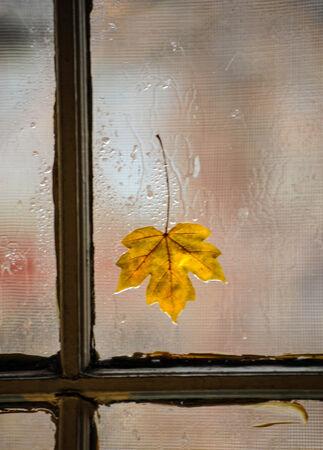 somber: Yellow leaf on window