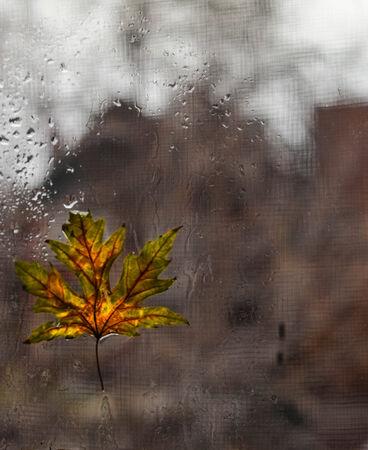 somber: Wet leaf on window