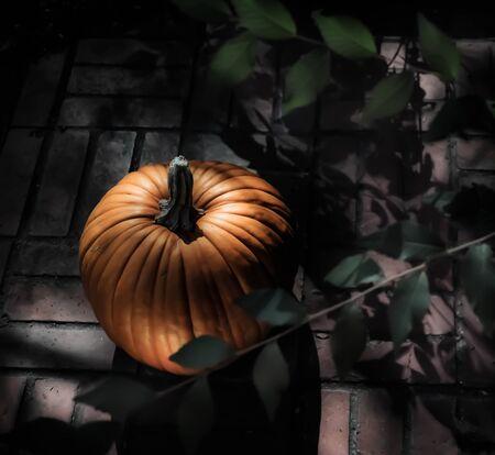 shadowy: Pumpkin in Moonlight V