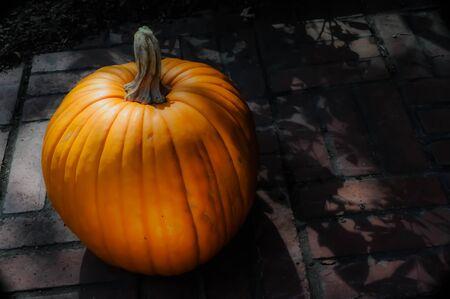 Pumpkin in Moonlight III