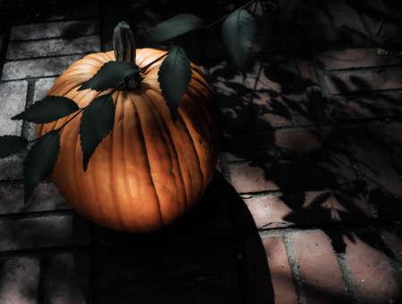 Pumpkin in Moonlight II Imagens - 47855839
