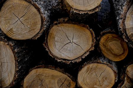 Chord of cut logs with rings exposed