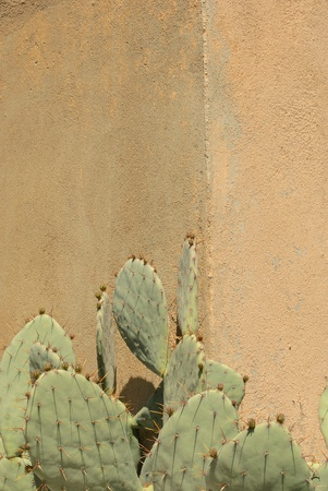 Prickly Pear Cactus Against a Wall in Vertical Format Stock Photo