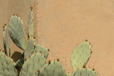 horizontal format horizontal: Prickly Pear Cactus Against a Wall in Horizontal Format Stock Photo