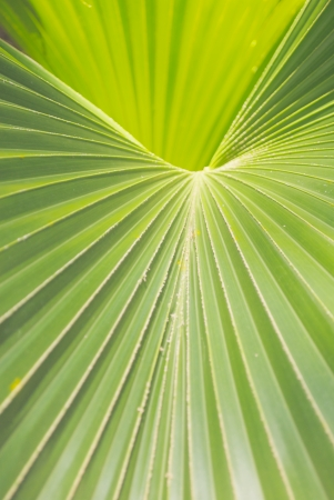 Close Up of a Palm Frond