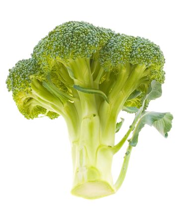 Broccoli Stalk on White Background Stock Photo