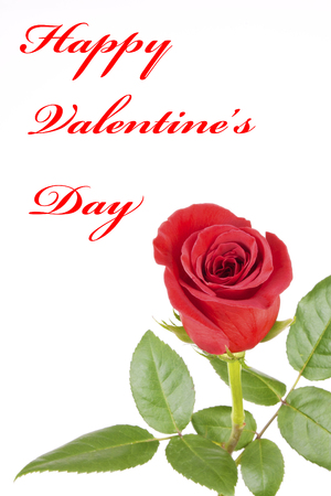 A Single Red Rose Isolated on White with Happy Valentines Day text