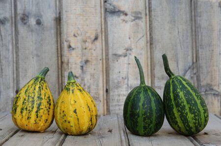 Different kind of Decorative Pumpkin Stock Photo - 10689187